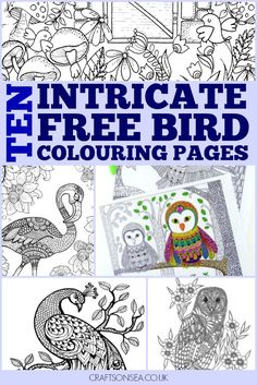 Free Bird Colouring Pages For Adults And Kids