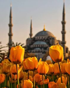 Istanbul City, Istanbul Travel, Istanbul Turkey, Places Around The World, Around The Worlds, Turkish Architecture, Turkey Travel, Best Places To Travel, The Good Place