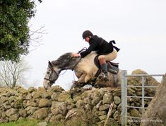 Comanche hunting Dec 2019. #loveirishhorses #horsesinireland #horseforsale Cross Country Jumps, Beach Rides, Horses For Sale, Day Off, Equestrian, Ireland, Hunting, Show Jumping, Deer Hunting