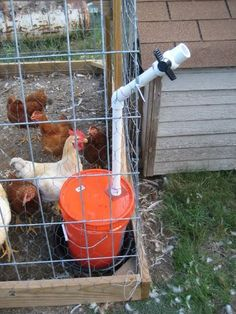 DIY chicken waterer. Has a valve that keeps critters out and creates vacuum to keep water from spilling out. (Aunt Ruth's chicken's would like this!)