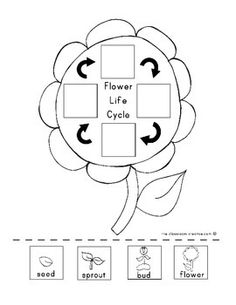 Plant Unit Activity: Science, Writing, and Graphic