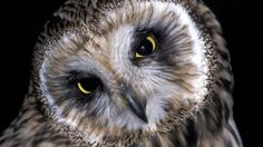 Öiset kulkijat / yle oppiminen Biology For Kids, Science And Nature, Beautiful Birds, Cute, Geography, Owls, Animals, Image, Friends