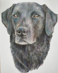 The finished portrait of the absolutely gorgeous Primrose! Christmas commissions are now open via my shop. Be quick their are only… Absolutely Gorgeous, My Girl, Labrador Retriever, Portrait, Dogs, Girls, Artwork, Shop, Christmas