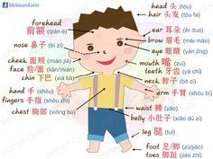 คำศัพท์ภาษาจีนกลาง หมวดร่างกาย Mandarin Lessons, Learn Mandarin, Chinese Words, Chinese Symbols, Rb Logo, China, Mandarin Language, Chinese Lessons, Vocabulary List