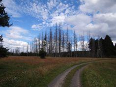 https://flic.kr/p/JJNy8v | Hessische Wälder | auch in den hessischen Wäldern gibt es leider tote Bäume..