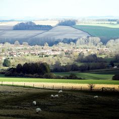 Burcombe Downs, Wiltshire 31st March 2016 | by jenniestoddart #landscape #wiltshire #england #rural #chalk #downs #downlands #fields #patchwork