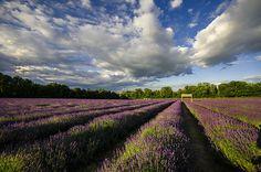 Aix-en-Provence: Lavendelduft und römische Architektur