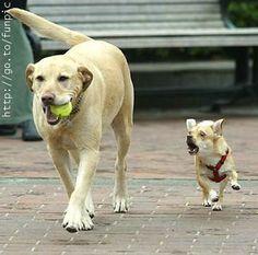 Hey..gimme  my BALL back!!