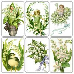 Image result for lily of the valley seed package art