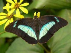 Benalmádena Butterfly Park