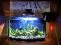 10W led 10000К аквариум aquarium - YouTube