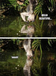 21 Funny animals pictures with funny cockatoo sucking from a straw. Funny animal pictures with captions. Baby Animals, Funny Animals, Cute Animals, Wild Animals, Baby Cats, Hello Beautiful, Animals Beautiful, Mundo Animal, Humor Grafico
