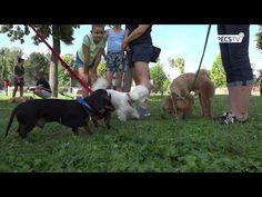 Új kutyafuttató Kertvárosban - 2020.08.28. Híradó Dogs, Youtube, Animals, Animales, Animaux, Pet Dogs, Doggies, Animal, Animais