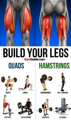 There are a ton of benefits of having strong legs! You may get tired of countless squats, lunges, and cardio, but the benefits of having strong legs are definitely worth all that hard work. Gym Workout Tips, Weight Training Workouts, At Home Workouts, Man Workout, Quads And Hamstrings, Glutes, Squats And Lunges, Leg Curl, Strong Legs