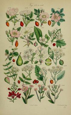 Le thème Impressions Botaniques vous intéresse-t-il ? Découvrez les Épingles recommandées dans Impressions Botaniques - mary.gautard@gmail.com - Gmail