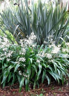 Two of my most favourite native plants. Two of my most favourite native plants. Backyard Garden Design, Garden Landscape Design, Garden Landscaping, Landscaping Ideas, Tropical Landscaping, Coastal Gardens, Small Gardens, Front Gardens, Shade Garden