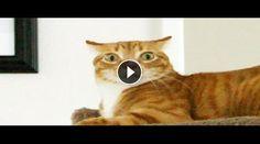 CaosVideo.it permette a te e ai tuoi amici di guadagnare denaro condividendo video!