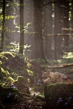 I had a dream where I was walking in a forest and a pack of wolves passed by and one stopped to look over his shoulder at me...have always wondered what that could mean.