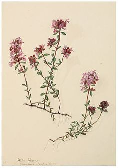 Margaret Dickinson Gallery » The Natural History Society of Northumbria
