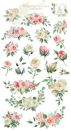 Creme & Rose Watercolor Set by Creativeqube Design on Watercolor Rose, Watercolor Illustration, Watercolor Paintings, Watercolor Flower Wreath, Rose Tattoos, Flower Tattoos, Decoration Entree, Plant Drawing, Flower Clipart