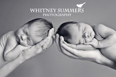Image detail for -Baby Harper & Averee {Washington & Oregon newborn twins photography ...