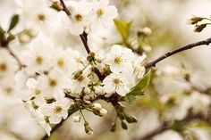 beautiful, flowers, and summer Bild