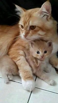 Mama and her look-alike baby. #adorable #cats #mama
