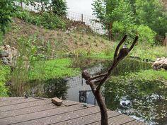 waterpartij, kikkervijver ergens verscholen achter in het terrein