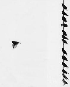 bird not on wire