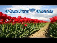 FLORES RELAJANTES VOL.2, MUSICA RELAJANTE PARA ESTUDIAR, TRABAJAR, DORMIR, RELAX MUSIC - YouTube