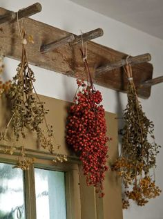 Old peg board is great for drying herbs