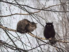 These are not owls.