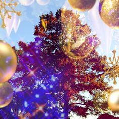 xmas tree!!!! #cameranapp