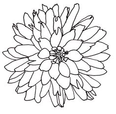 Flower Drawings Techniques line drawing - flowers - dahlia Flower Line Drawings, Line Flower, Flower Sketches, Flower Art, Drawing Flowers, Dahlia Flower, Art Flowers, Flowers Nature, Flowers Garden