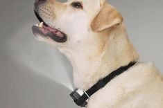 Best Martingale Dog Collar Buying Guide in 2019 Walking your dog should be a pleasure, not a stressful chore. However, if you have a dog that pulls while on his leash or slips out of his collar and. Best Bark Collar, Anti Bark Collar, Led Dog Collar, Dog Shock Collar, Bark Collars For Dogs, Dog Collars, Very Small Dogs, Dog Branding
