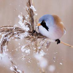 Agree cute chubby bird decor