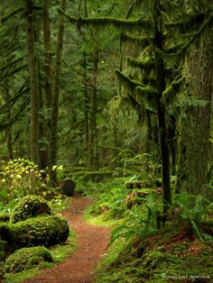 Woodland Path Photograph 16X20 Woodland by machelspencePHOTO