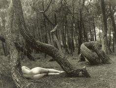 Nude in the woods, circa 1975Photographer: Jean Dieuzaide  (viabillyjane)