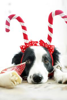 annie's official christmas photo by glennilight, via Flickr