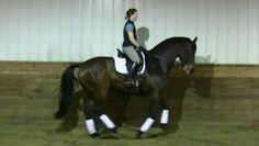 Dressage Training and Lessons Dressage, Stables, Canada, Training, Horses, Animals, Animales, Horse Stables, Animaux