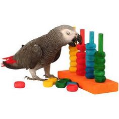 parrot toys - - Yahoo Image Search Results