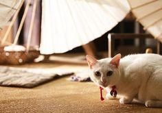 Twitter / nekozamuraiinfo: 【ドラマ版放送情報】本日11/5より第6話放送スタート!この後10:25~STVから順次放送です!忘れにゃいでね♪ #猫侍 Neko, Adorable Animals, Kittens, Kitty Cats, Kitten, Baby Cats, Cute Animals
