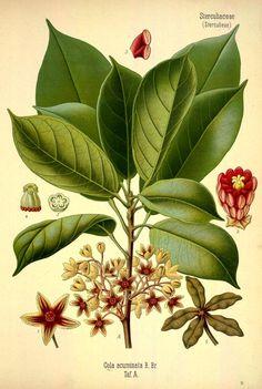 1883; v.3 - Köhler's Medizinal-Pflanzen in naturgetreuen Abbildungen mit kurz erläuterndem Texte : - Biodiversity Heritage Library