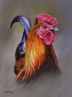 cockerel, Gallery A McKinnon, SAA Professional Members Galleries Rooster Painting, Rooster Art, Chicken Painting, Chicken Art, Chickens And Roosters, Hens And Chicks, Beautiful Birds, Beautiful Chickens, Animal Paintings