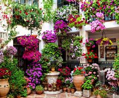 May is the Patios festival in Córdoba, Spain. The patios have been awarded status as an Intangible Human Heritage Site by UNESCO.