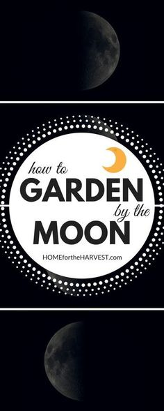 Aligning your garden planting schedule with the lunar cycles can be very rewarding! This tutorial includes basic, intermediate, and advanced methods of gardening by the moon | Home for the Harvest