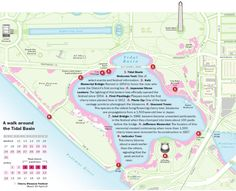 Download a map of the best cherry blossom locations - The Washington Post