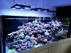 Congratulation to this Tank of the Quarter winner - aka Johnson Cheng gorgeous mixed reef tank setup ! Saltwater Aquarium Setup, Coral Reef Aquarium, Sea Aquarium, Saltwater Fish Tanks, Aquarium Design, Marine Aquarium, Marine Tank, Marine Fish, Reef Aquascaping