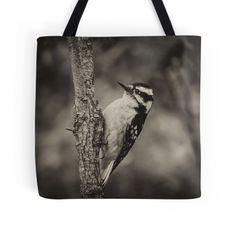 Downey Woodpecker - Black & White
