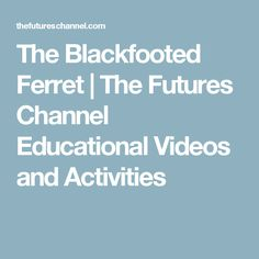 The Blackfooted Ferret | The Futures Channel Educational Videos and Activities